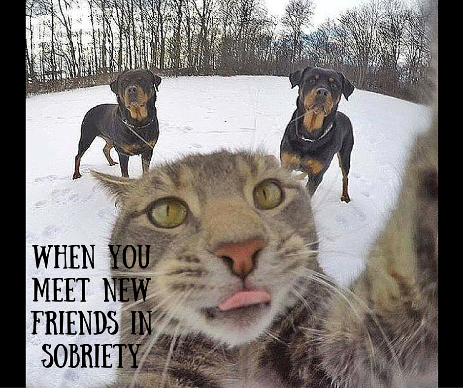 when you meet new friends in sobriety keeping it sober memes keeping it sober,